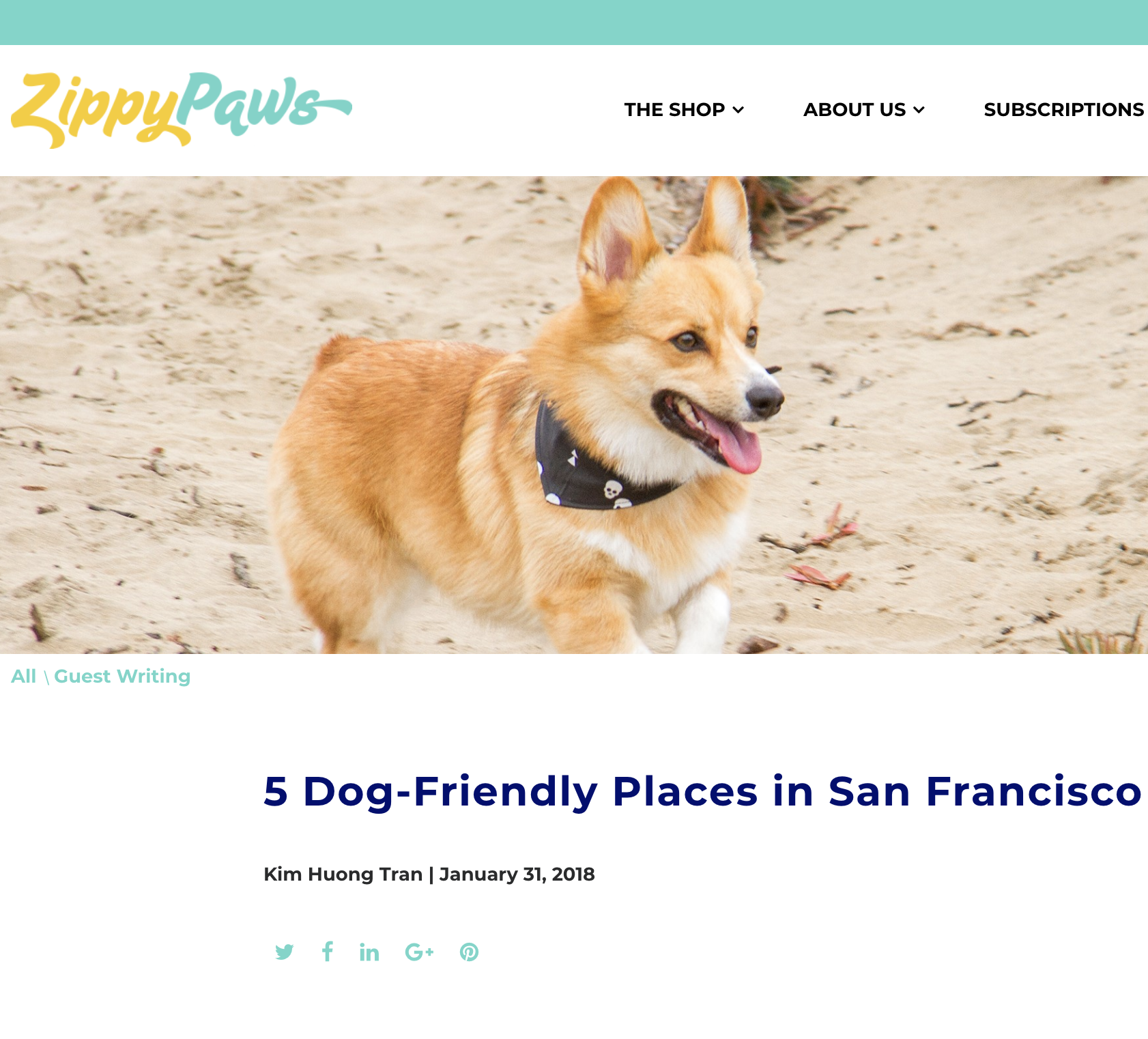 Zippy Paws:  5 Dog-Friendly Places in San Francisco