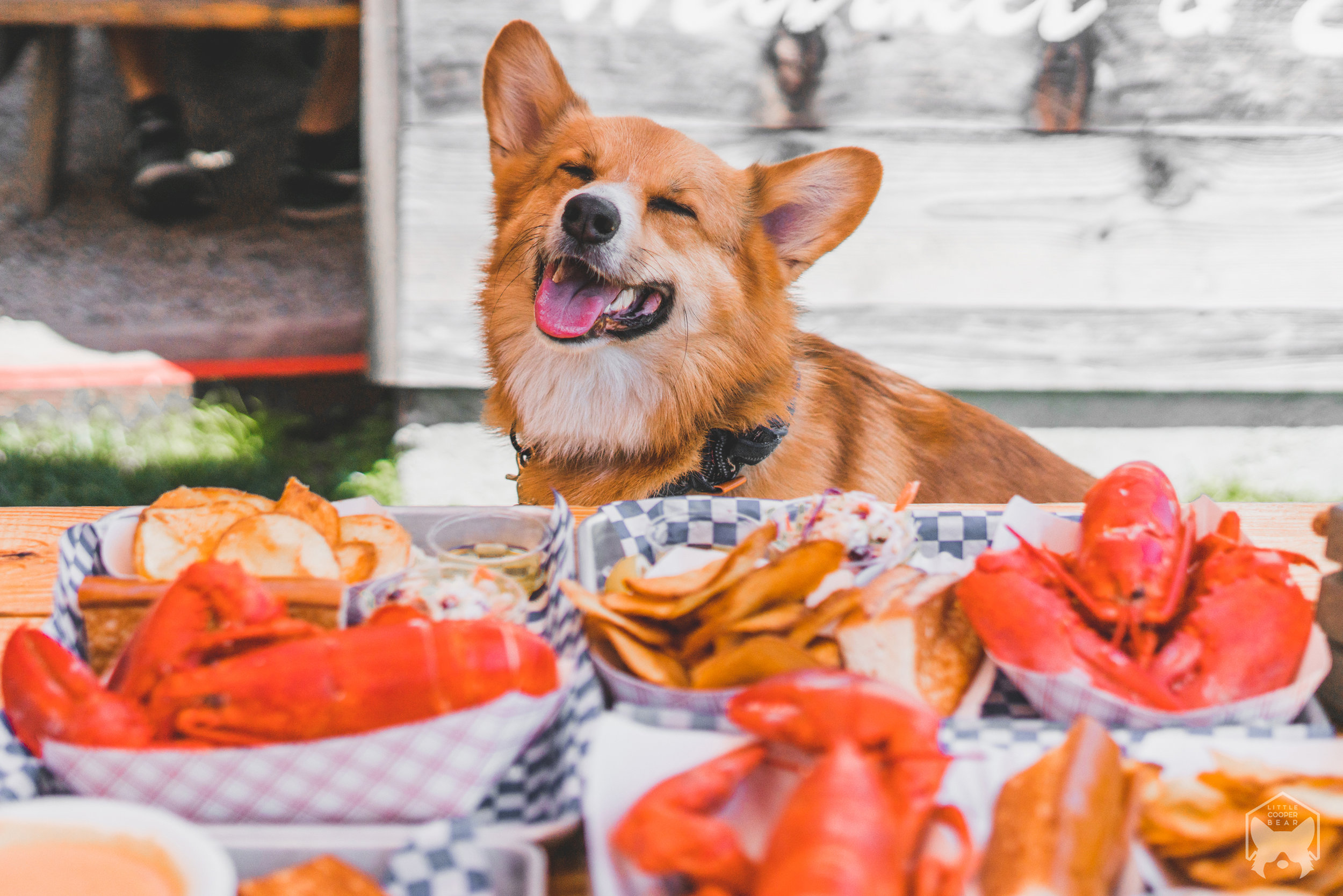 Top 7 Dog Friendly Restaurants San Francisco