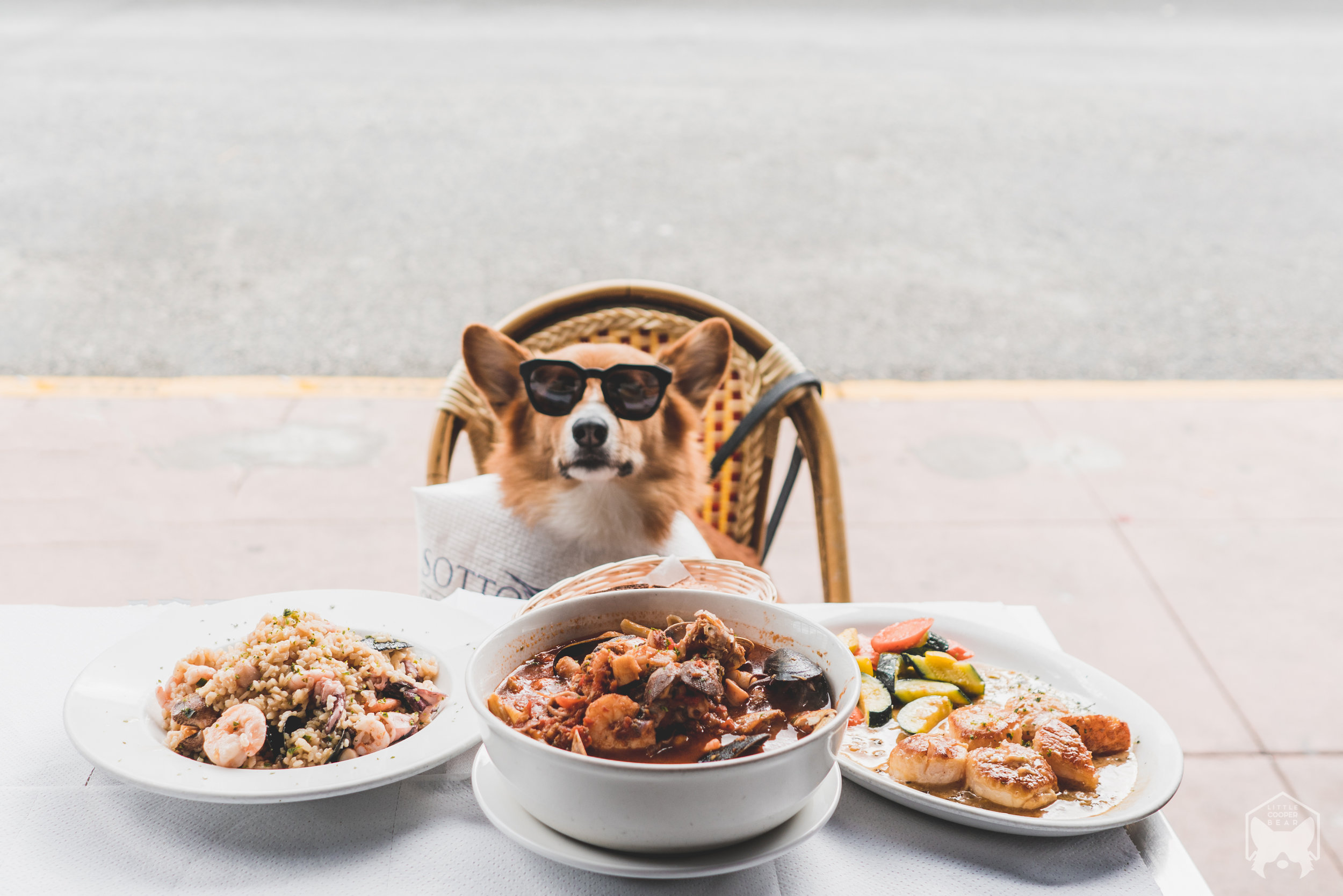 Top 7 Dog-Friendly Restaurants || San Francisco