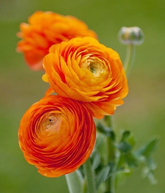 mendocino wild flowers