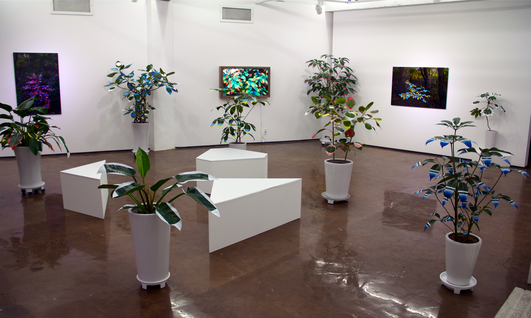 FAUX/ REAL Solo Exhibition Installation View 1