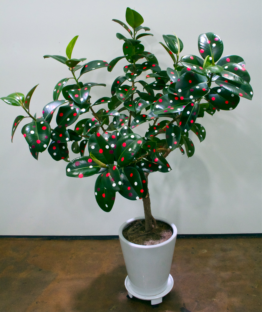 Untitled , Dimensions Variable, Acrylic on Plant, 2014