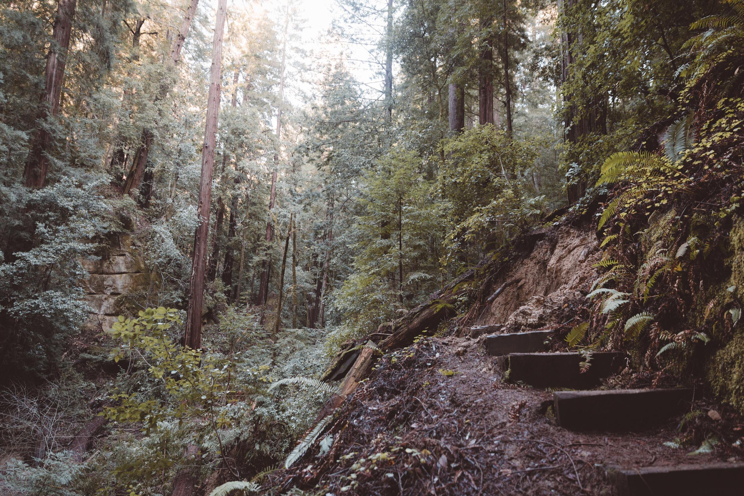 big-basin-trail-detour-hike-and-shoot-1.jpg