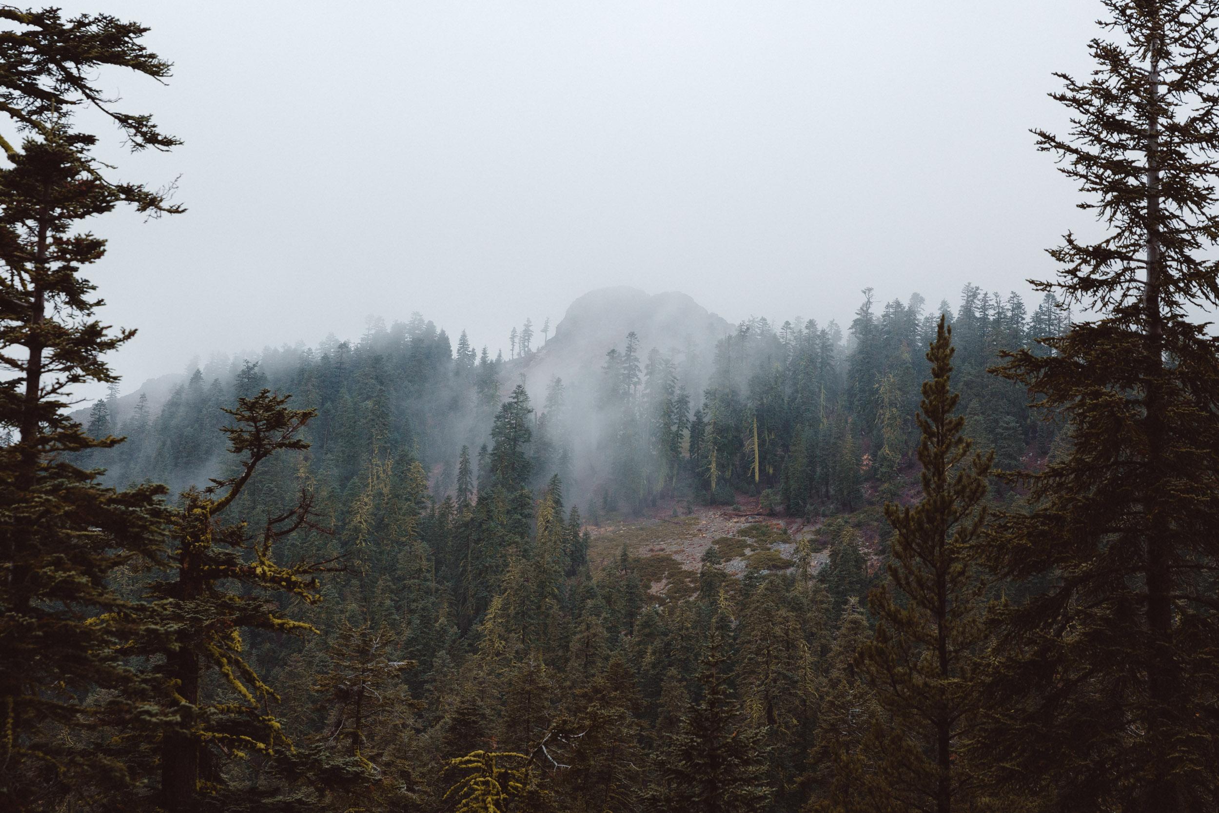 five-lakes-trail-fog-hike-and-shoot-1.jpg