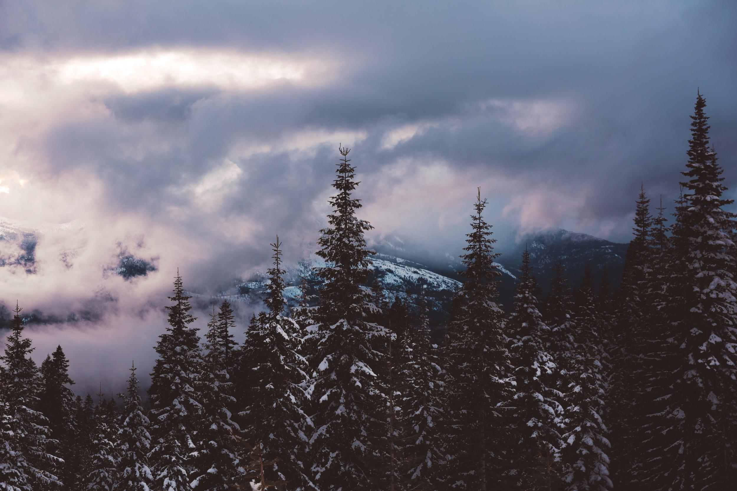 shasta-adventure-trees-hike-and-shoot-1.jpg
