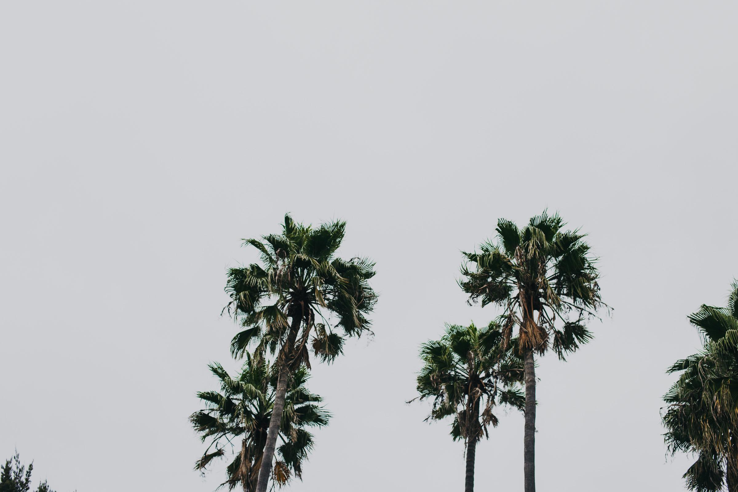 Boda-Celaya-Hacienda-Mexico-Fotografia-Pierce--33.jpg
