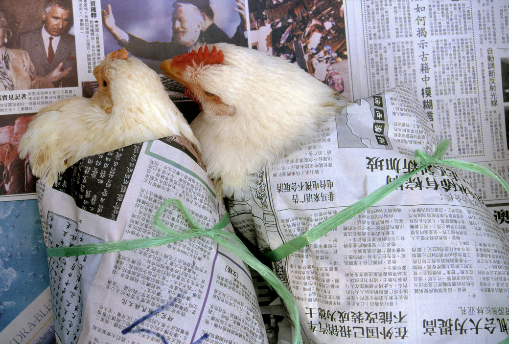 Wrapped chickens Gueorgui Pinkhassov.jpg
