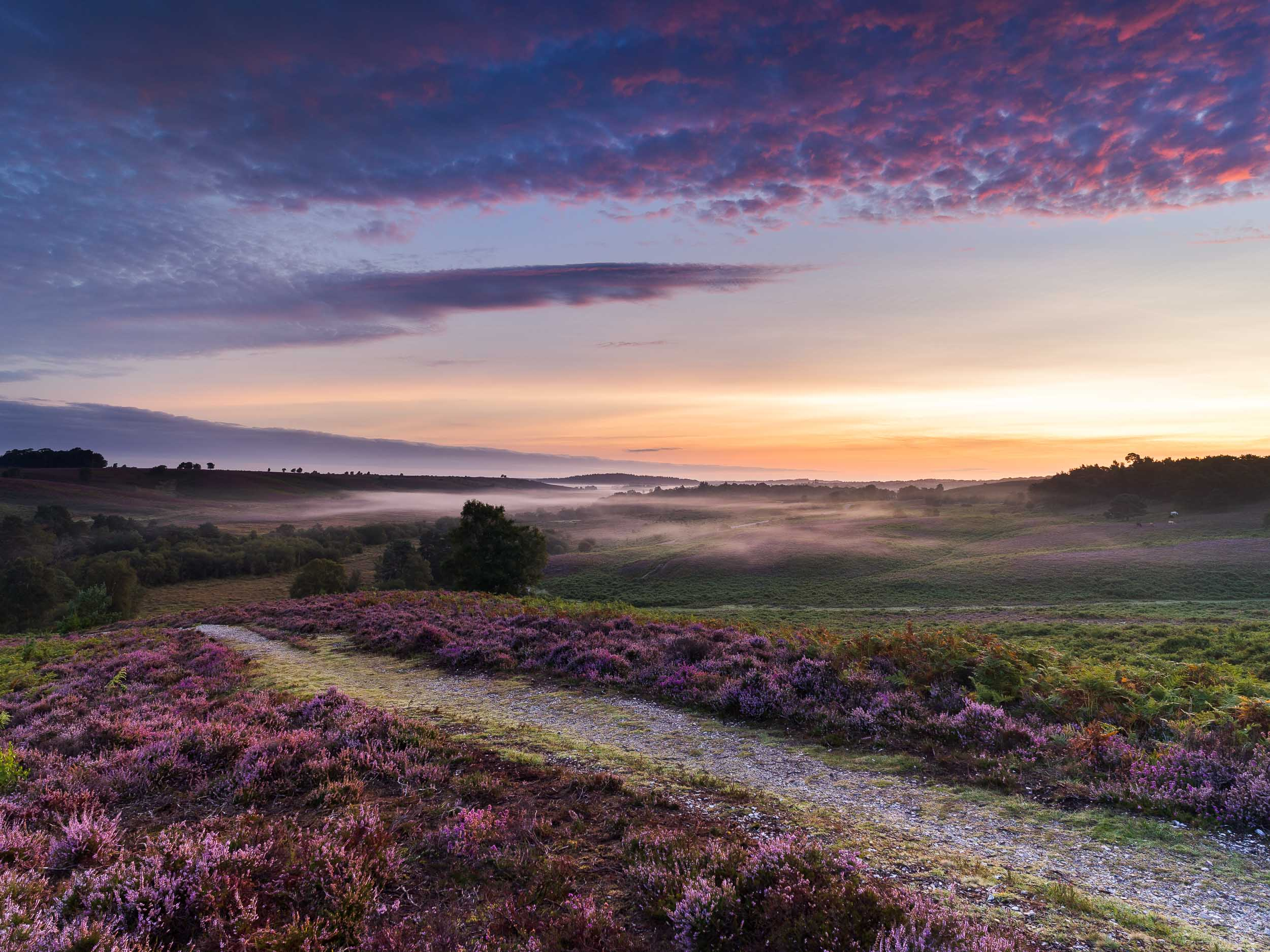 Heather Sunrise at Rockford Common, New Forest