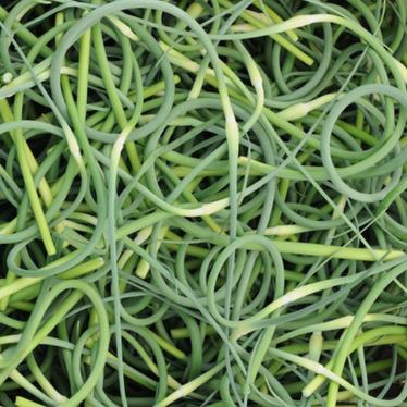 garlicscapes.png