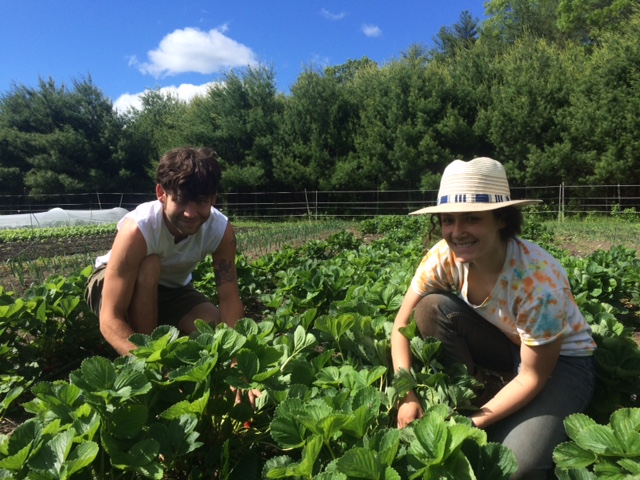 Chas and Nicole picking strawberries - definitely not robots.