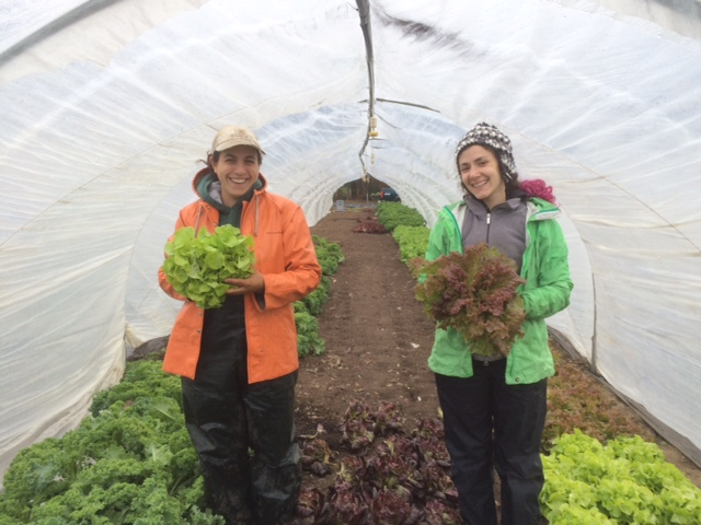 Susan and Nicole are very excited for head lettuce!