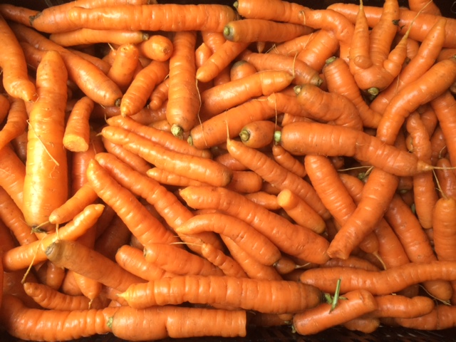 We'll have plenty of carrots for all your Thanksgiving needs!
