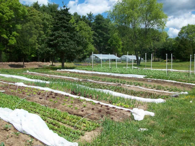 Second Nature Farm, 2009 - Though our beds were only half as long as they are now, we still couldn't fill them with a single crop!
