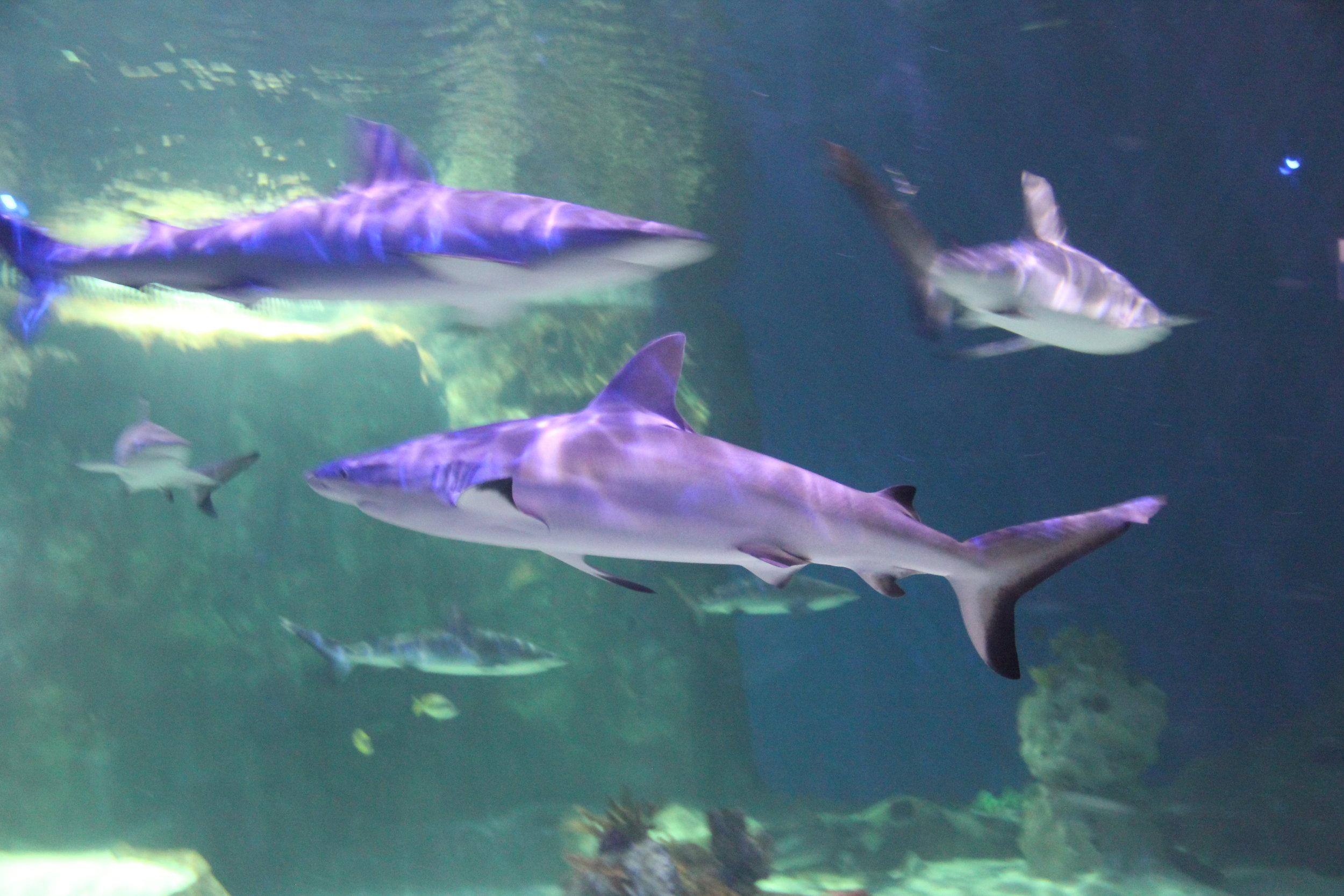 amanda jones yoga with the sharks utah