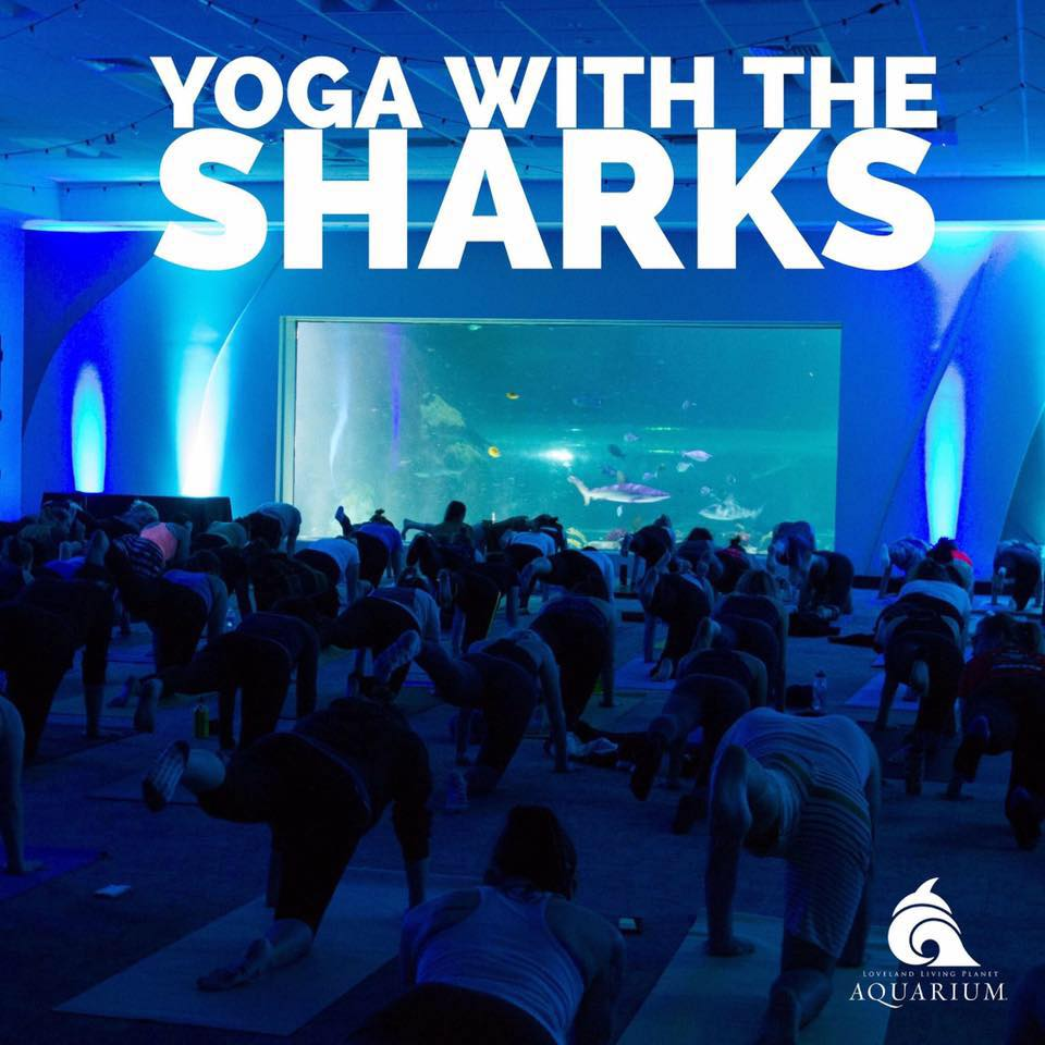 yoga with the sharks amanda jones mobile yoga