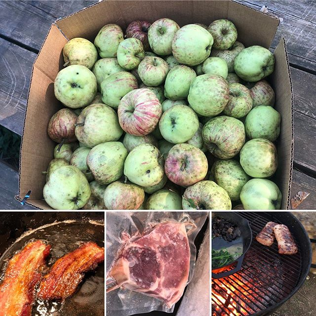 Fresh Apples, Bacon, Chops, Sausage and more for you @berea_farmers_market tomorrow😋 #kyapples #pasturedpigs #sunnywolffarm
