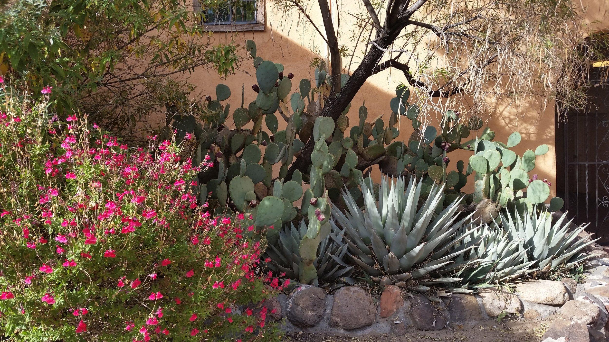 cactusandflowers.jpg