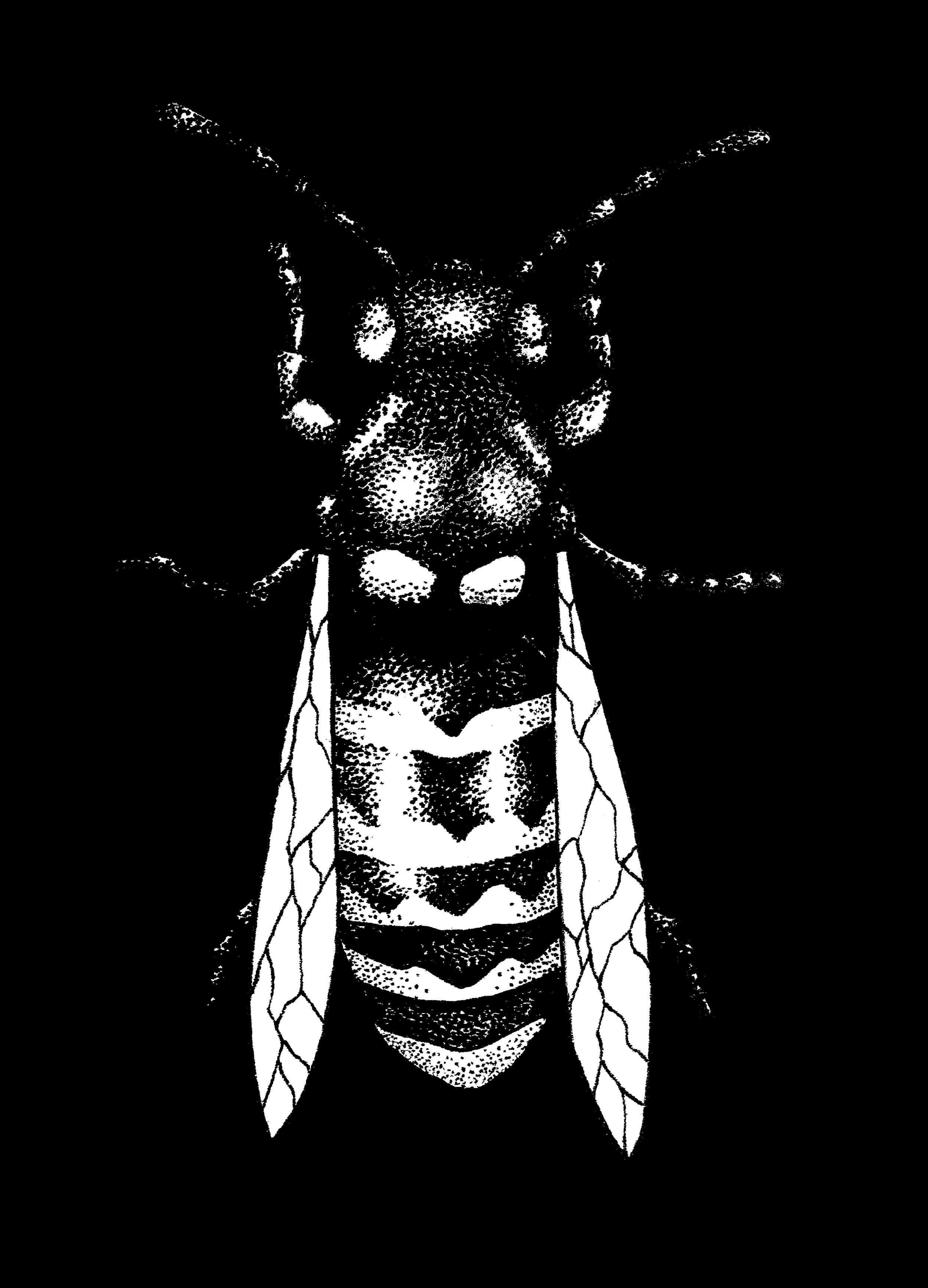 bee no circle.png