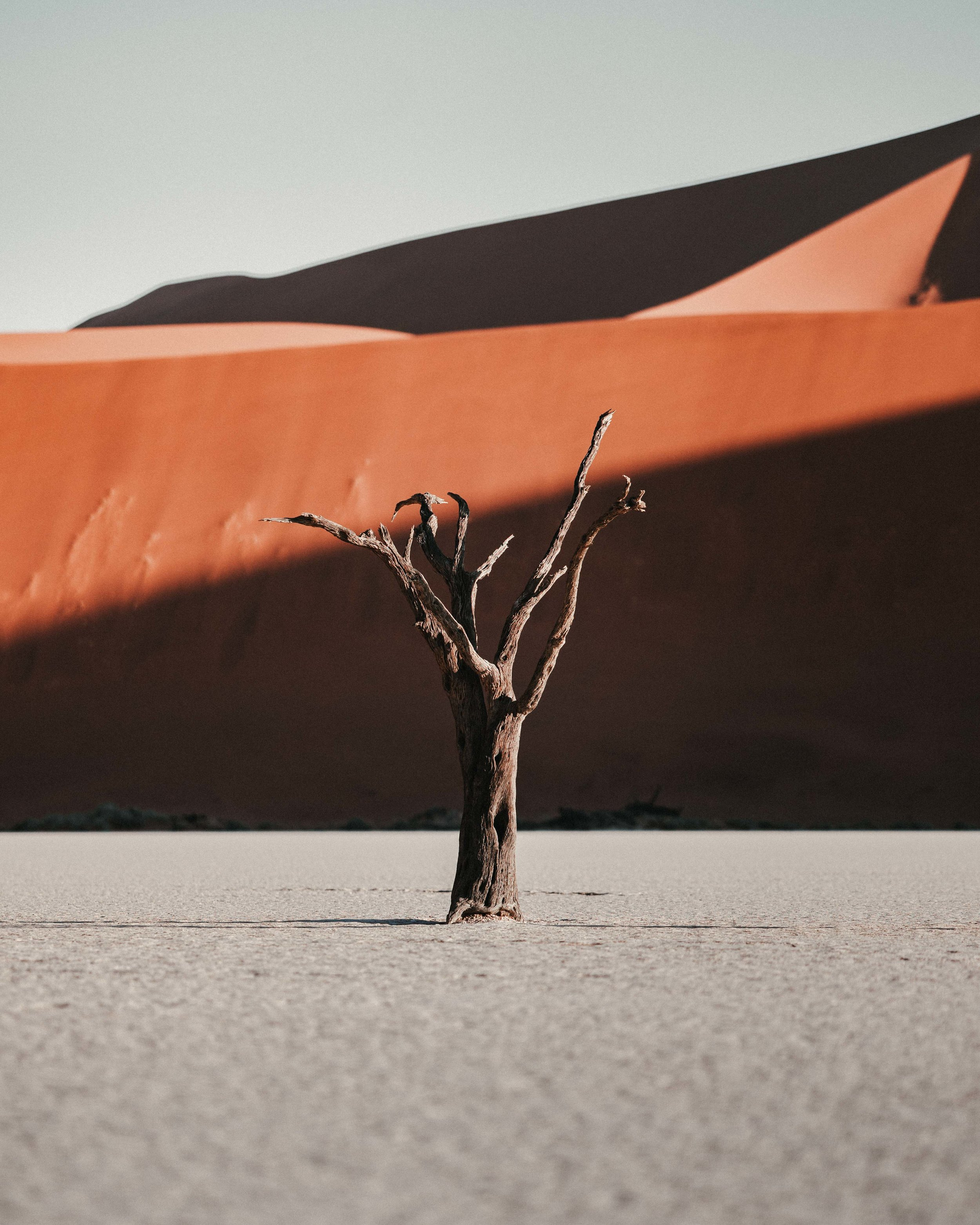Deadvlei, Namibia. Sony A7Riii @ F1.8 - 1/4000 second - 50 ISO.