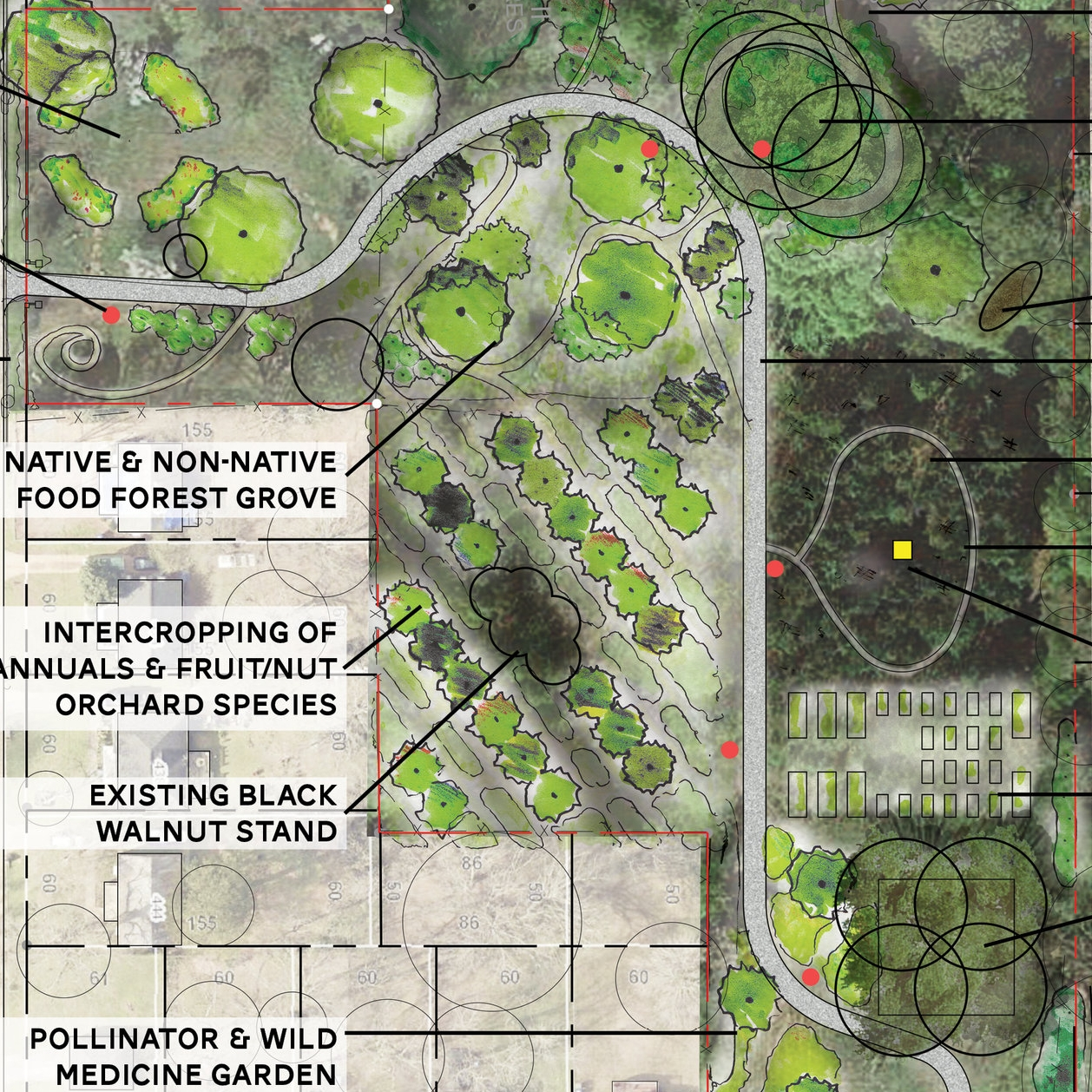 Urban Farms & Food Forests