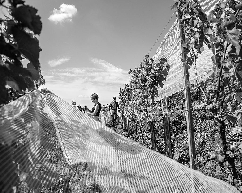 charbonnay 2016 09 filets.jpg