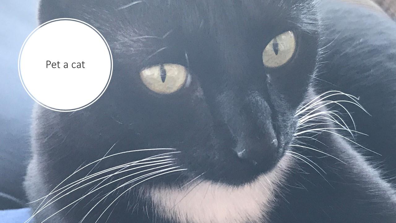 express_cat.jpg