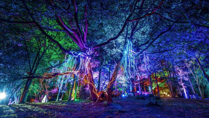 Noisily Festival In The Woods
