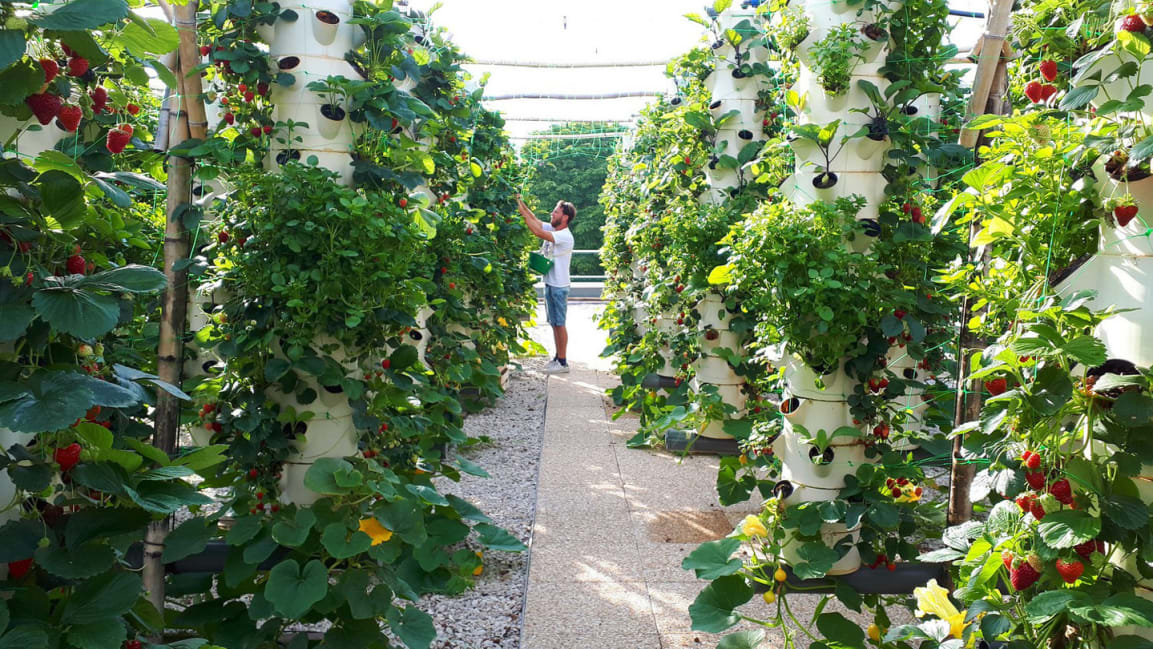 1-the-worlds-largest-rooftop-farm.jpg