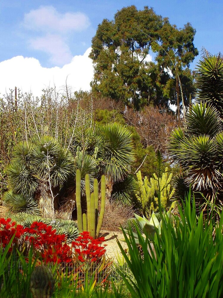 University of California, Irvine Arboretum Garden