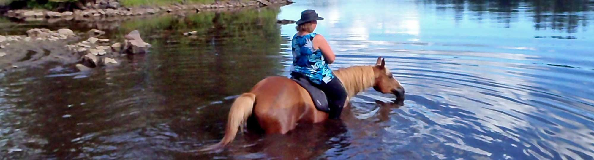Horse-swimming-at-horse-country-campground.jpg