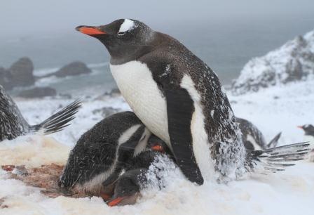 antarctica 3.jpg