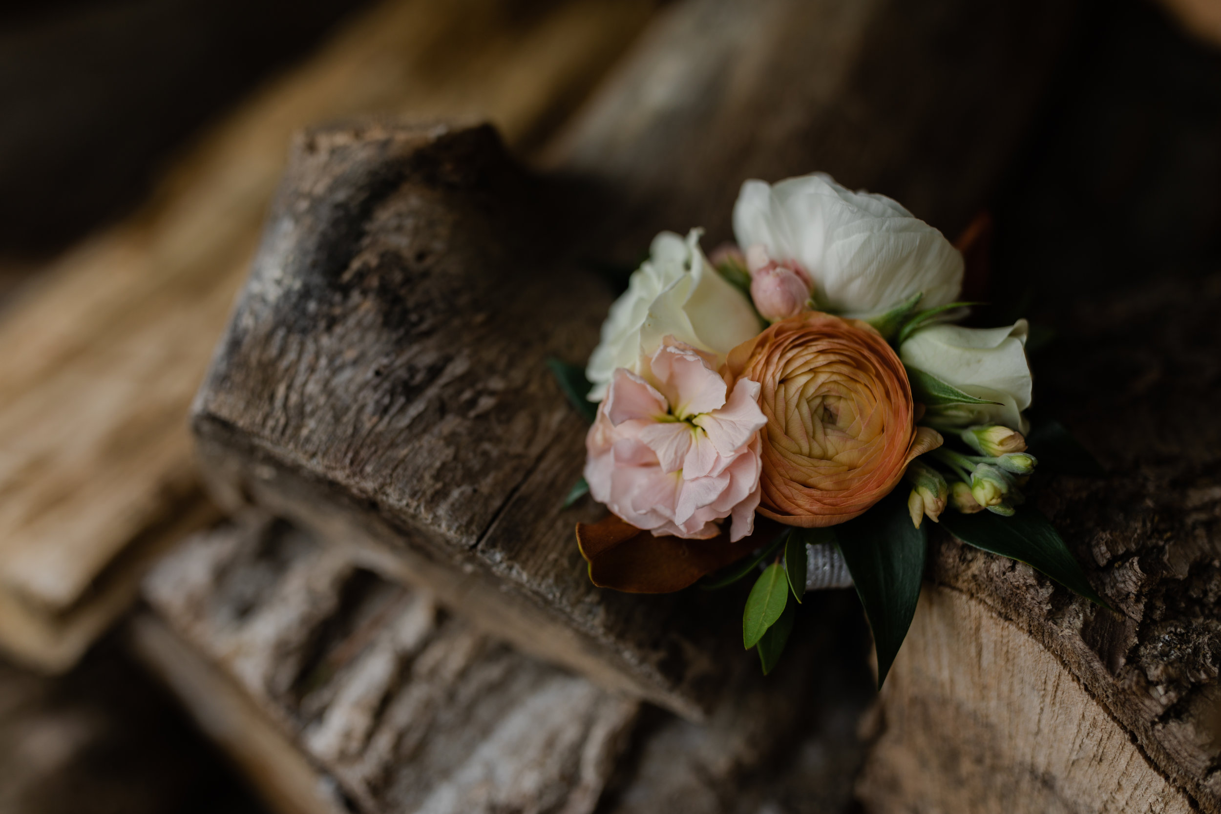 colleen biese photograohy