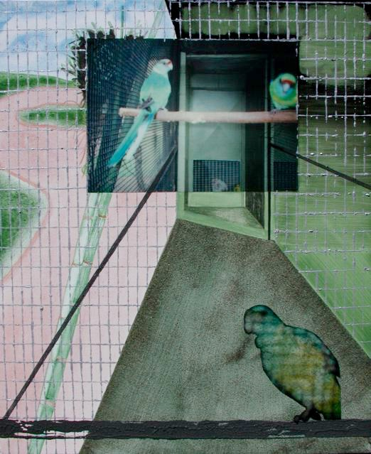 Australia 9:  Parrots @ Wildworld