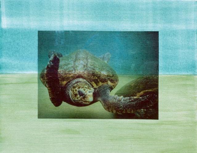 Australia 7: Turtles @ Manly Cove
