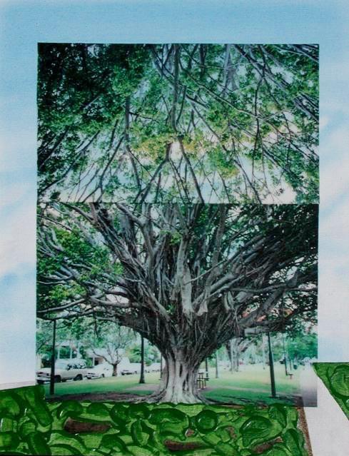 Australia 12: Ficus @ Cairns