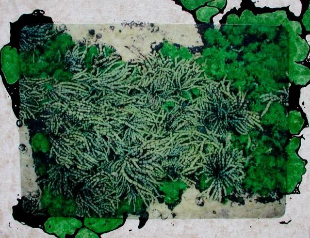 Australia 16: Manly Cove Algae