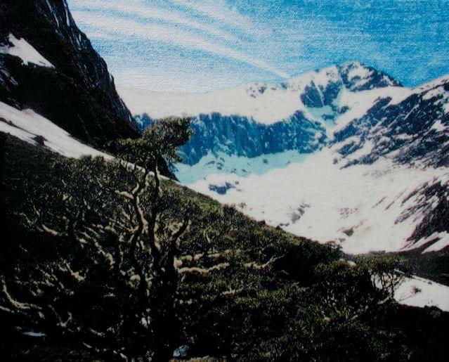 New Zealand 14: Beech Tree