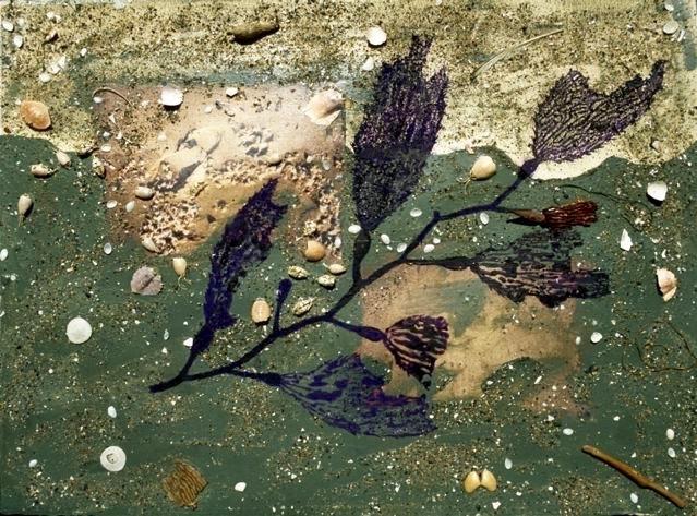 Intertidal II