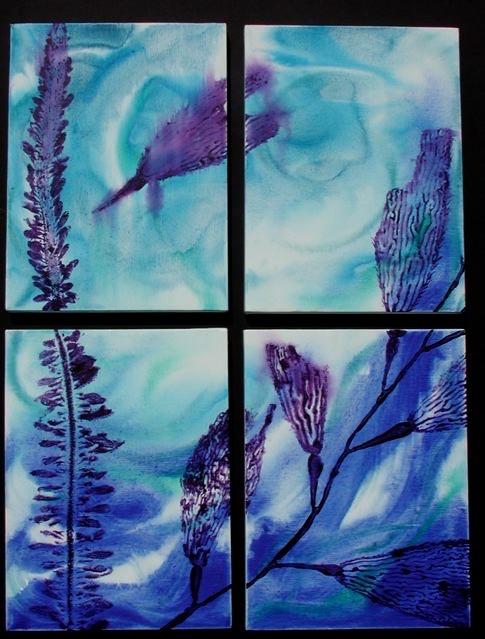 Kelp Study 24