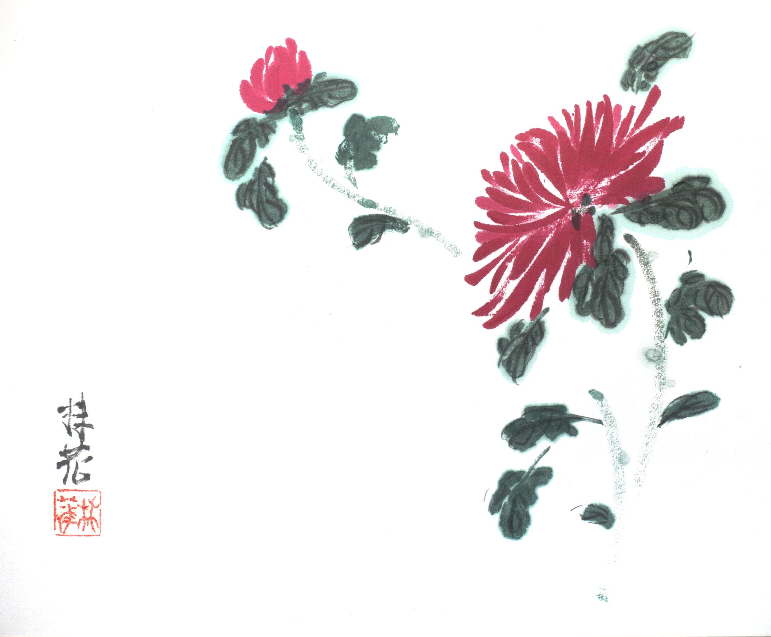 Chrysanhemum 4 Gentlemen 3.jpg