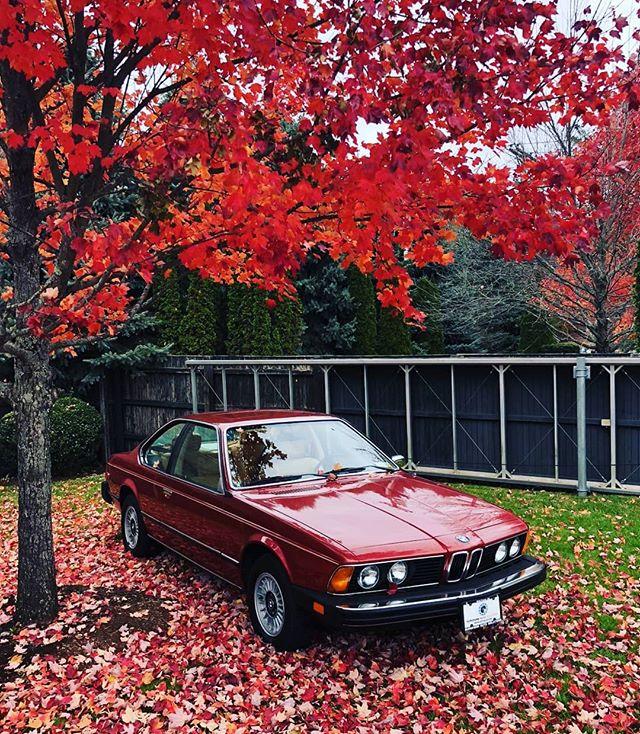 Just arrived 1977 BMW 630CSi manual trans, 66k original miles, like new, see more pix on web site!