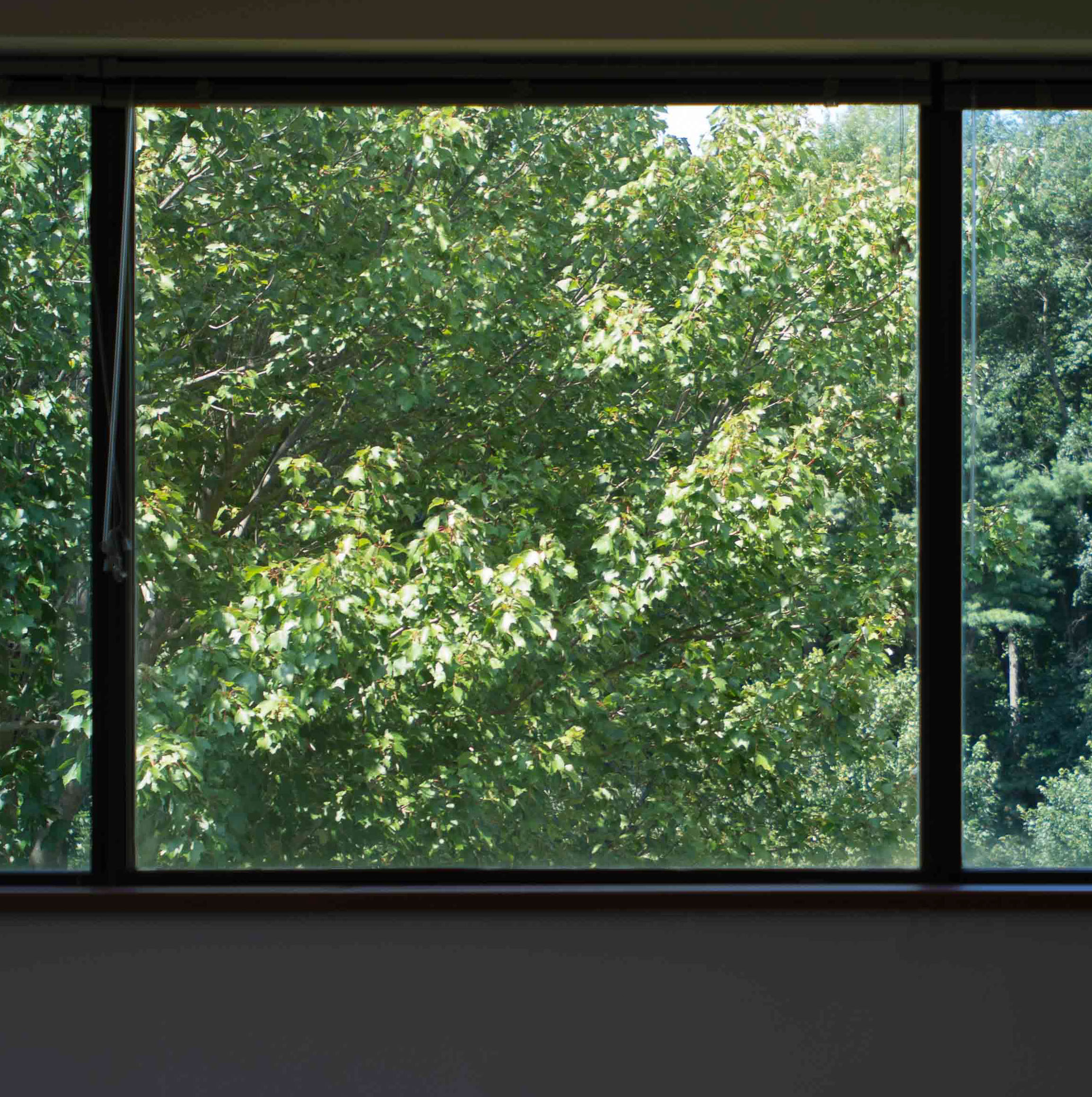 Window View-7403.jpg
