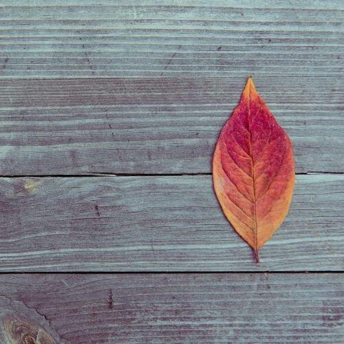 Fall Leaf SM.jpeg