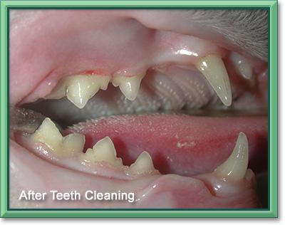 services_dental_after.jpg