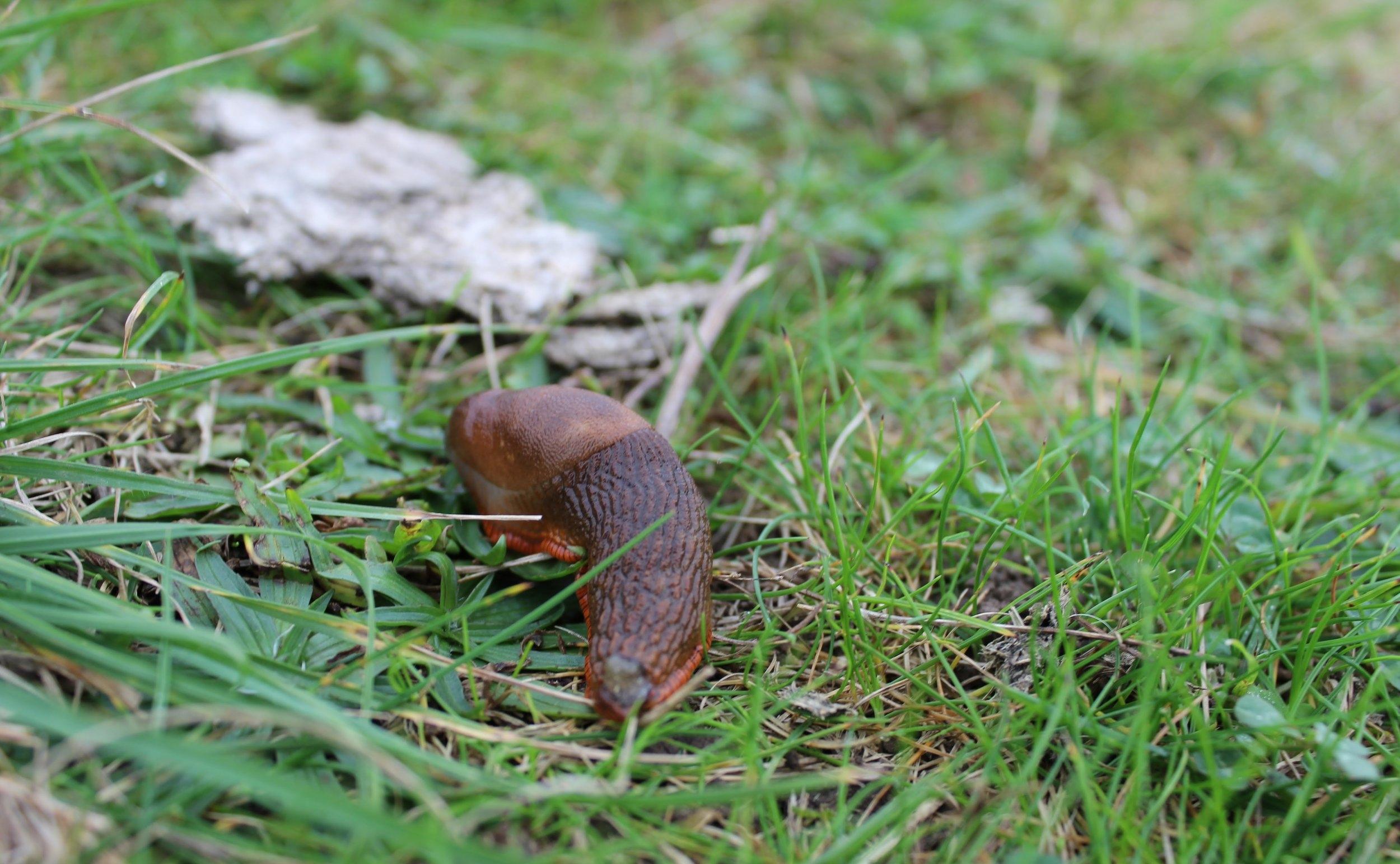 Slug at Stonehenge