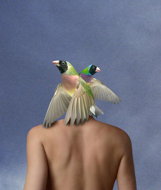Birdshead