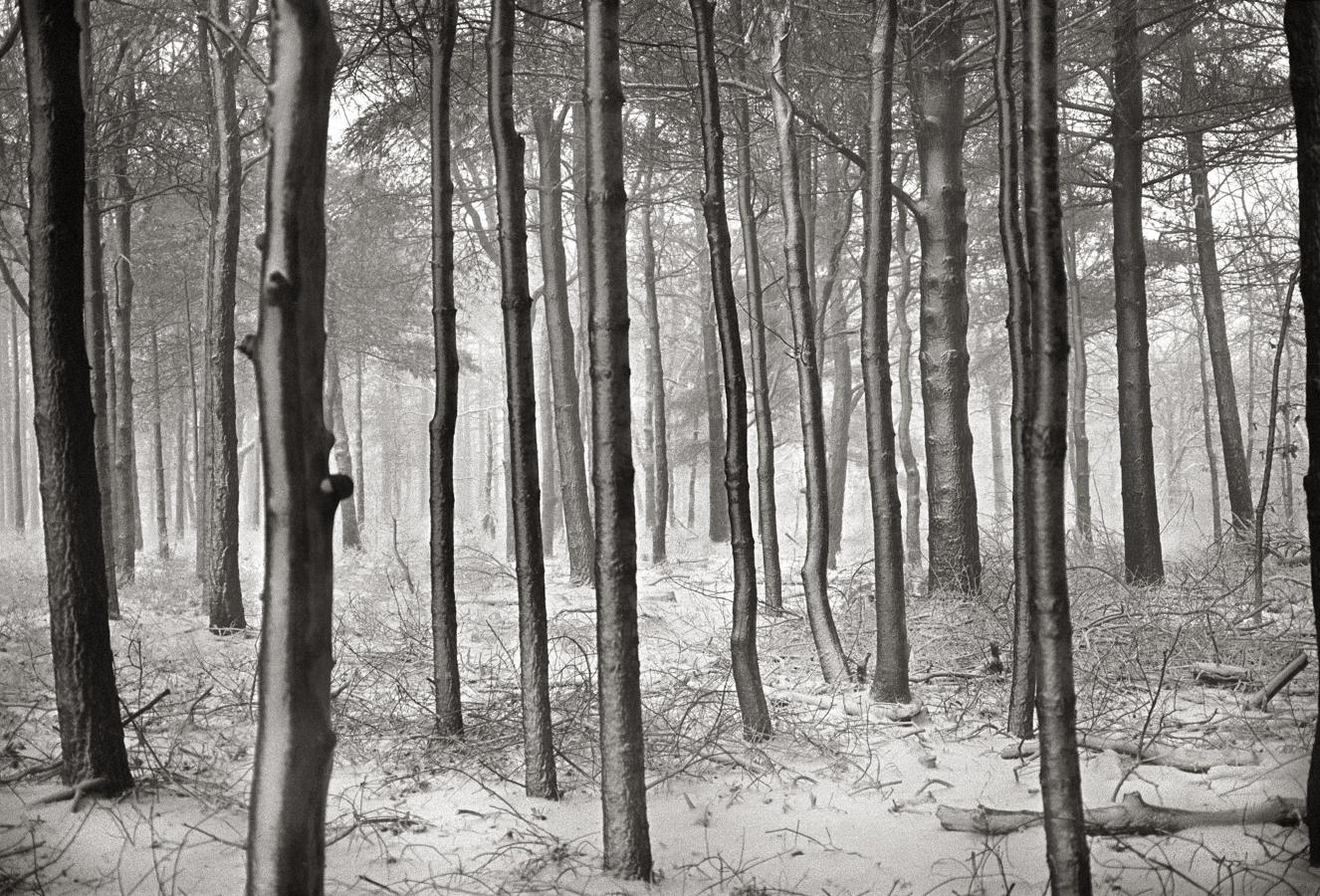 zide_woods in snow_west tisbury_ma _.jpg