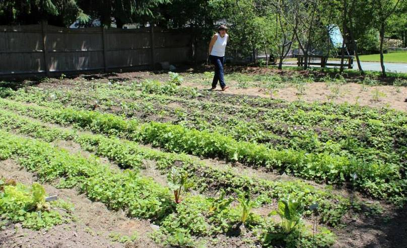 My mom in her garden that has gradually morphed into a small organic farm.