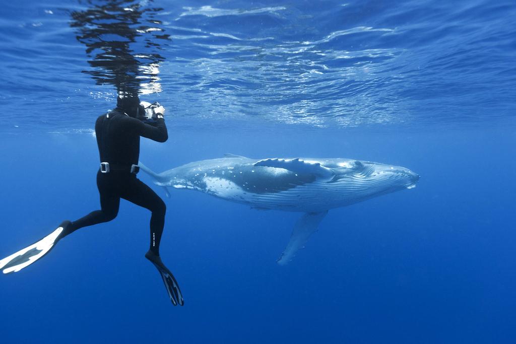Whales Before You Die bucket list