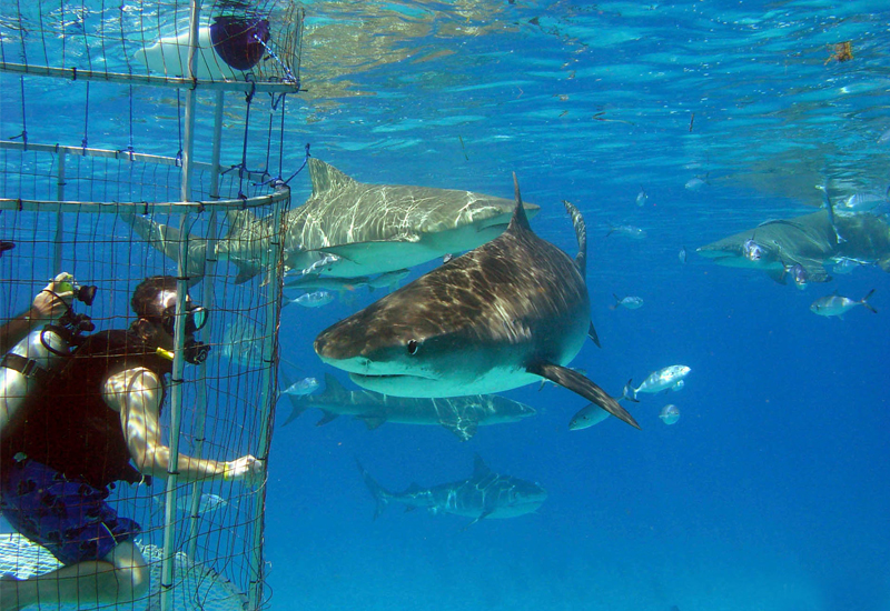 Shark Cage Diving- Guadalupe Islands, Mexico Requires Basic Open Water Certification